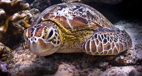 Selingan turtle islands 西灵安-海龟群岛