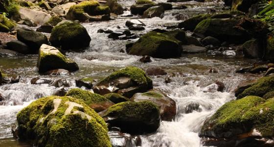 Crocker Range Park 克洛克山脈國家公園