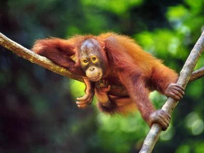 Borneo Sandakan Nature Tour ~ 3 Days 2 Nights