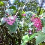 parpel flower