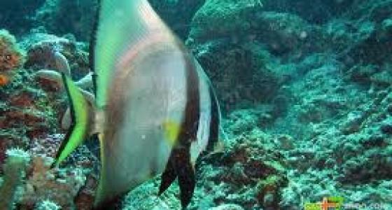 3d2n Mabul snorkelling