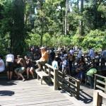 orangutan visit sabah